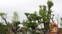 Kiểm lâm tỉnh Hải Dương chưa được phép kiểm tra cây trong vườn bạc tỷ