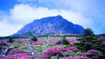 """Lạc vào """"thiên đường tình yêu"""" ở đảo Jeju"""