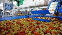 Thăm xưởng chế biến, đóng hộp rau, củ, quả ở nhà máy Nga