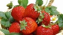 Bí quyết giúp trẻ lâu từ trái cây màu đỏ