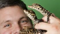 Nhân giống thành công 24 chú cá sấu con bé xíu tại vườn thú Anh