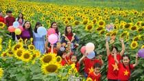 Tháng 12, về Nghệ An tham gia lễ hội hoa hướng dương