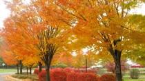Khám phá 10 điểm du lịch tuyệt đẹp mùa thu