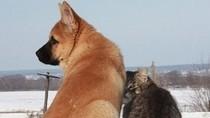 Ai bảo không có tình bạn Chó - Mèo