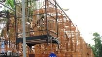 Toàn cảnh về ngày hội thi chim chào mào ở Hà Nội