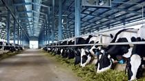 Trang trại bò sữa Vinamilk thứ 7 đạt chuẩn Global Gap
