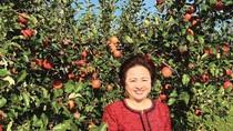 Đường về Việt Nam của táo Nhật Aomori