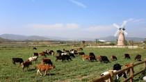 Đầu tư làm sữa Organic, Vinamilk và TH nâng tầm thương hiệu nông nghiệp Việt