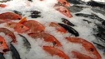 Thực phẩm đông lạnh phải chờ 7 ngày mới có mã số tạm nhập tái xuất