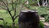Ngỡ ngàng vườn cây, ao cá, chuồng gà nhà diva Mỹ Linh (P2)