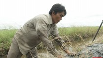 Gánh nặng mưu sinh của gia đình nghèo ở Kiên Giang