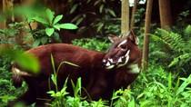 5 loài động vật ở VN được xếp trong top 100 loài lâm nguy
