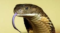 4 bài thuốc dân gian sơ cứu rắn cắn