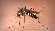 10 căn bệnh nguy hiểm do muỗi gây ra