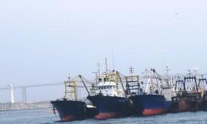Đại gia BĐS xin ưu đãi mua 100 tàu cá: Nhiều Bộ không đồng tình