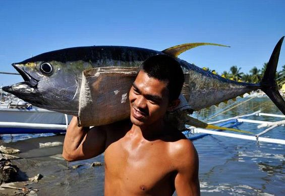 the philippines tuna industry a profile The destruction of the philippine tuna industry december 11, 2012 115 by: our correspondent (edwin espejo, a journalist and blogger for asian correspondent in the.