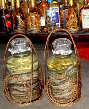 v Theo các chuyên gia, không nên coi rượu rắn là rượu bổ.