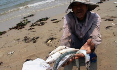 Bộ Y tế sẽ kết luận hải sản các tỉnh miền Trung ăn được hay chưa?