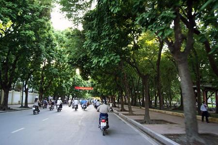 Đường Trần Phú là con đường đẹp của thủ đô, đã đi vào trong thơ ca. Ảnh: PV